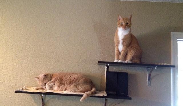 猫好き必見!猫ちゃんが大喜びするキャットウォークを自作する方法★のサムネイル画像