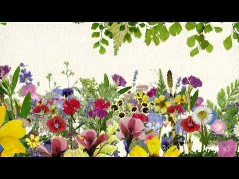 NHKの「趣味の園芸」は役に立ちますか? - 藤田先生がいない時は... - Yahoo!知恵袋
