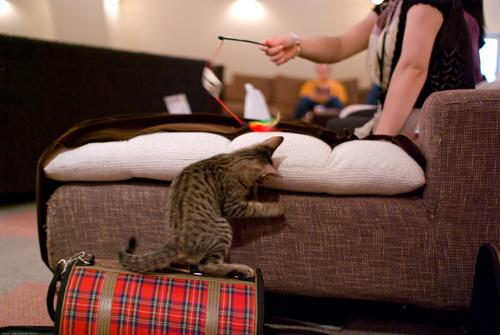 猫の爪とぎどうしてる?かわいい猫の爪から守るソファー対策のサムネイル画像