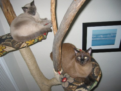 猫さまのための手作りキャットタワー♡みなぎる飼い主の愛と忠誠♡のサムネイル画像