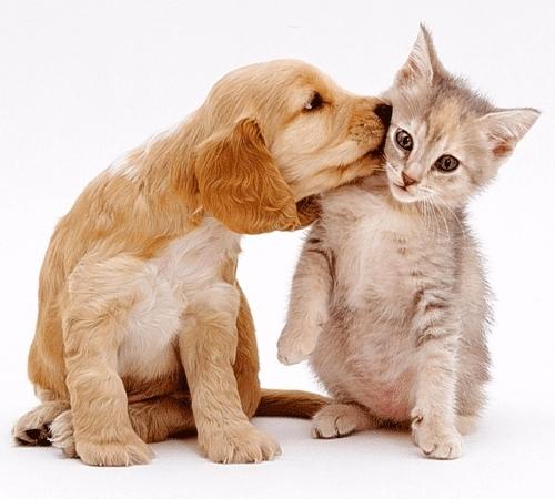 ペットがいる素敵な生活って憧れます。人気のペットをご紹介!のサムネイル画像