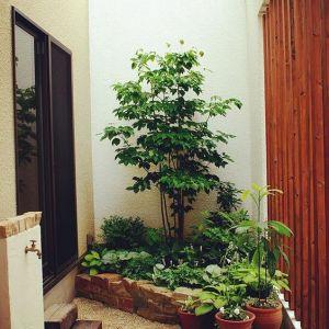 【ガーデニング】春夏秋冬、花が絶えない花壇のレイアウト方法の画像