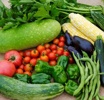 もぎたて野菜最高!家庭菜園を始めてみよう!おすすめの野菜は?のサムネイル画像