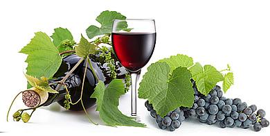 実はとってもシンプルで簡単!おいしい自家製ワインの作り方のサムネイル画像