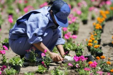 園芸関係の仕事に就職したい!仕事の種類や資格についてご紹介しますのサムネイル画像