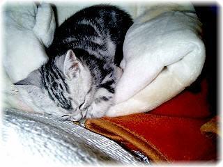 我が家に初めて猫が来た!気になる猫との付き合い方と育て方のサムネイル画像