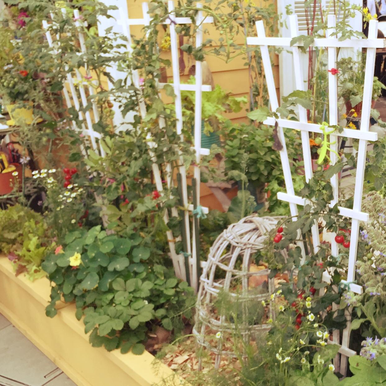 植物がすくすく育つ!オシャレな支柱をガーデニングに役立てようのサムネイル画像