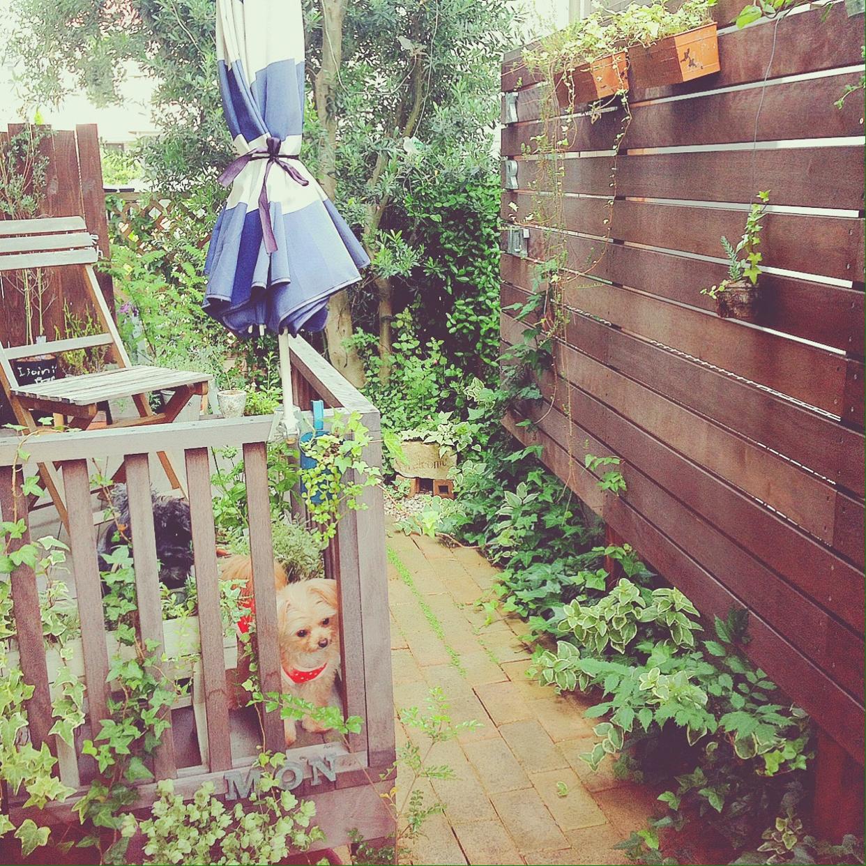 お庭を寛ぎの空間に。おしゃれなフェンスをDIYしてみませんか?のサムネイル画像