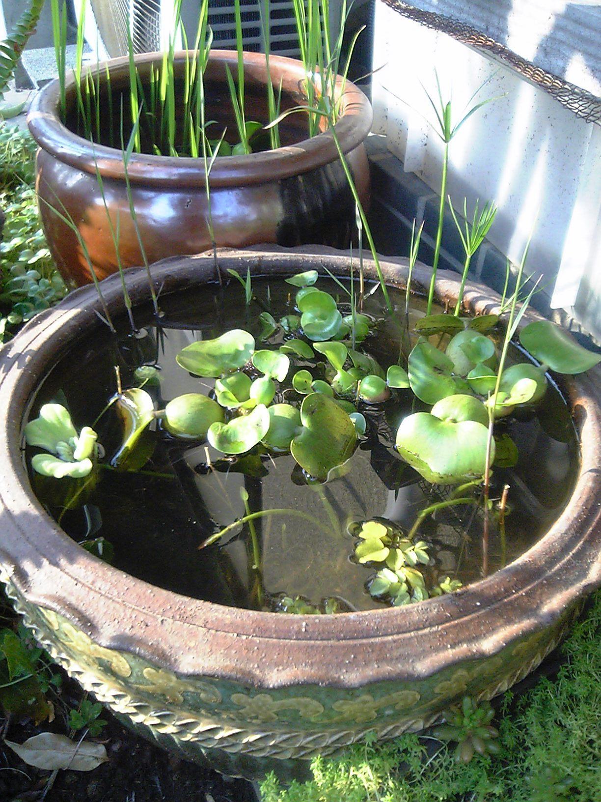 ビオトープを始めよう!自然のままだから、動植物を育てやすいよのサムネイル画像