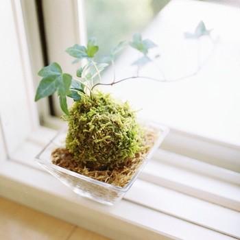 苔をインテリアに取り入れましょう!育て方とおしゃれなデザインのサムネイル画像