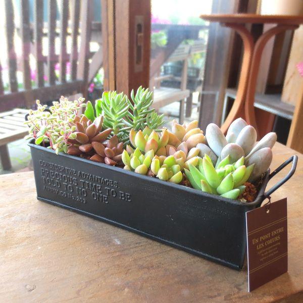 初心者でも簡単に出来る、多肉植物の寄せ植えの作り方をご紹介のサムネイル画像