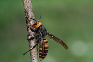 蜂に刺されたら迅速な応急手当を!正しい処置がその後の回復を決めるのサムネイル画像