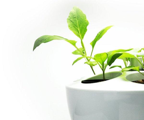 LED水耕栽培を始めよう! 自宅にいながら簡単ガーデニング♪のサムネイル画像