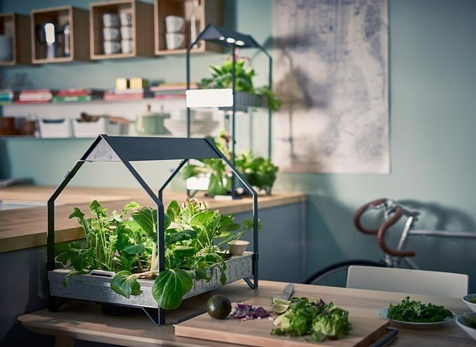 自作水耕栽培を始めよう!フレッシュな野菜で心も身体も健康に♪のサムネイル画像