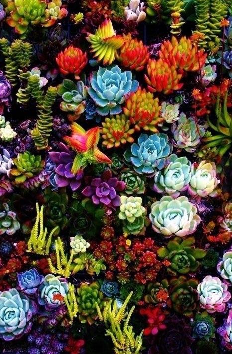 多肉植物はインテリアにぴったり!おすすめをご紹介します!のサムネイル画像