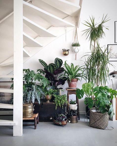 【人気の観葉植物一覧】写真で名前が分かる、大きさ別観葉植物一覧のサムネイル画像