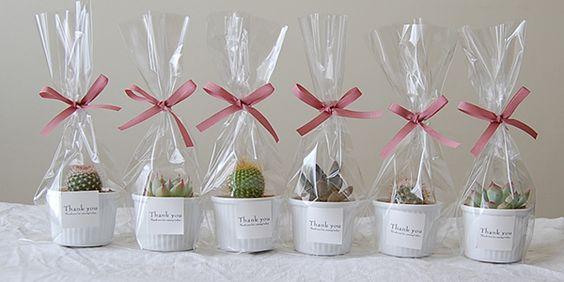 大切な人への贈り物に多肉植物はいかが?色々な実例を紹介しますのサムネイル画像