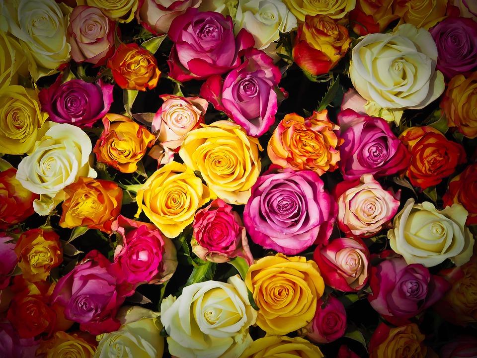 バラのギフトをお探しの方、必見!バラのアレンジメントのご紹介!のサムネイル画像