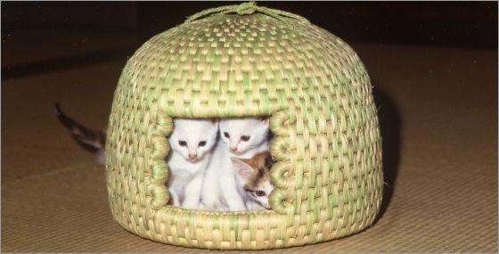 猫ちぐらを段ボールで簡単に作る方法は?作り方からお手入れまで紹介のサムネイル画像