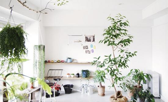 グリーンを飾りませんか?植物をインテリアにしたら部屋が変わった!のサムネイル画像