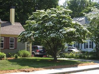 【庭造り】おすすめの植木10種と基礎知識紹介【ガーデニング】のサムネイル画像