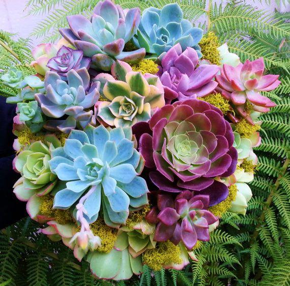 おしゃれでかわいい。プレゼントにも喜ばれる可愛い多肉植物!のサムネイル画像