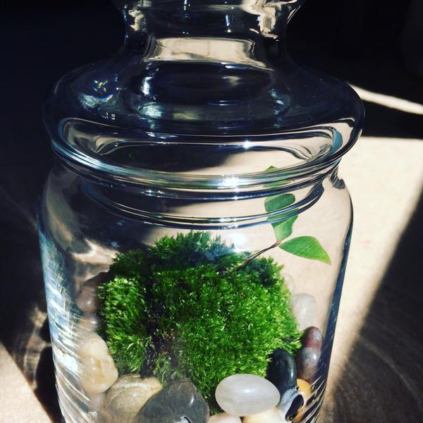 空き瓶リサイクルも兼ねて☆苔のテラリウムはじめてみませんか?のサムネイル画像