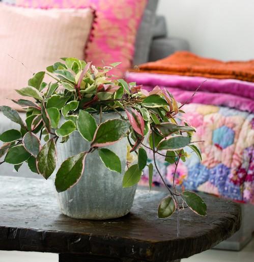 リビングにどんなグリーンを置きますか?リビングの植物まとめのサムネイル画像