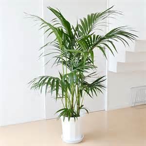 マイナスイオンでリラックス!観葉植物の嬉しい効果や育て方を調査!のサムネイル画像