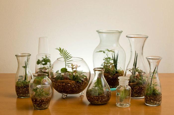 知って得しよう!観葉植物のおしゃれな飾り方などを紹介しますのサムネイル画像