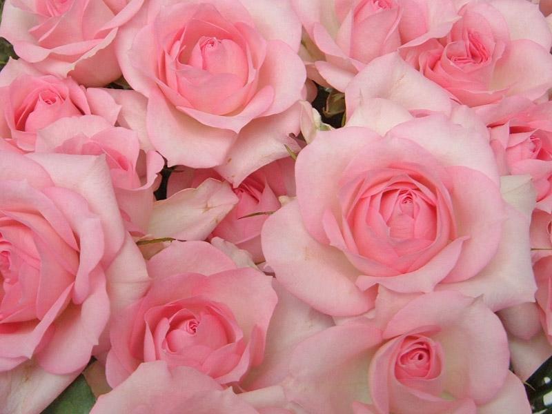 もらって嬉しい!人気なお花特集~お花のある生活はいかがですか?~のサムネイル画像