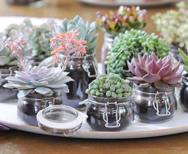 ダイソーで買える観葉植物!ダイソーグッズでおすすめのリメイク術!のサムネイル画像