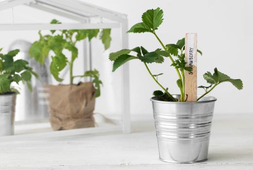 冬のお部屋にどうですか?イケアの植木鉢を使ってガーデニング。のサムネイル画像