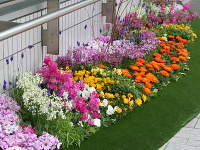 ガーデニングで人気の花をご紹介!ぜひ育ててみてください!!のサムネイル画像