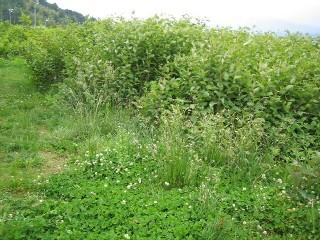 ガーデニングの天敵!?雑草対策をして庭をキレイにしよう!!のサムネイル画像