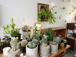 サボテンに合う鉢って?サボテンに合った鉢選びをしよう!!のサムネイル画像
