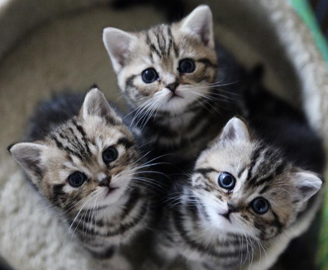 猫も飼い主も大満足!?大人気のペット用品をご紹介します!!のサムネイル画像
