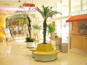 雰囲気を和ませてくれて空気も綺麗に!お店に置きたい観葉植物まとめのサムネイル画像
