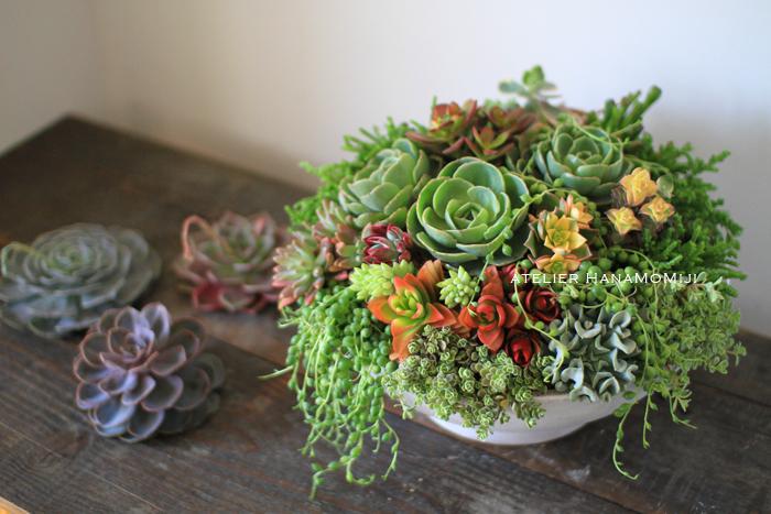 【可愛い!】多肉植物の寄せ植えをしてみませんか?【簡単】のサムネイル画像
