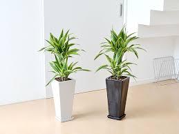 観葉植物を育てる上で欠かせない土!そんな観葉植物用の土あれこれのサムネイル画像