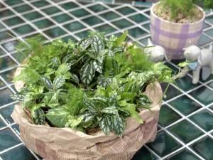 【初心者必見!】ガーデニング初心者にも育てやすい植物をご紹介!のサムネイル画像