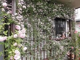 ガーデニングにトレリスを取り入れて、植物を豪華に這わせてみて!のサムネイル画像