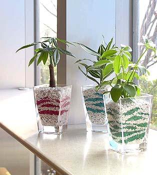 見ているだけで楽しい!観葉植物のオシャレで可愛い容器まとめのサムネイル画像