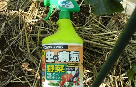 知っておいて早めに対処!観葉植物の成長を阻害する病気まとめのサムネイル画像