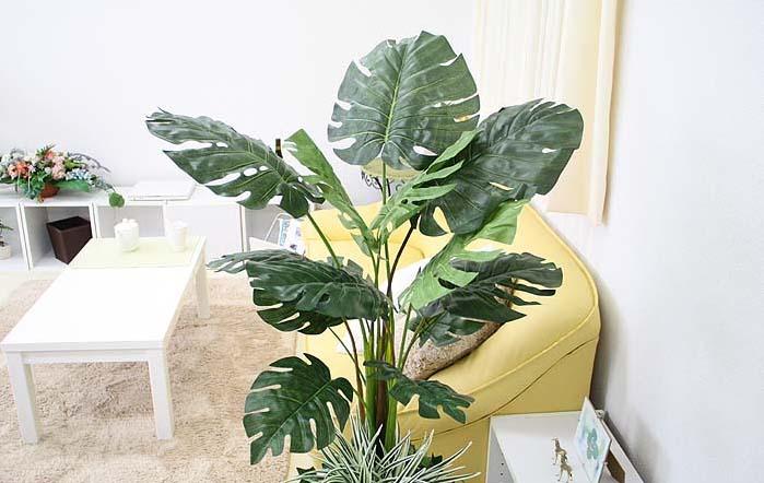 近くにあるだけでホッと落ち着く♪アジアンテイストな観葉植物のサムネイル画像