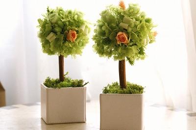 【絶対に喜ばれる贈り物☆】贈り物にピッタリな素敵な観葉植物のサムネイル画像