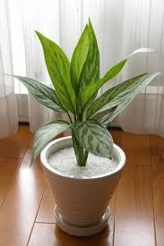 日当たりが悪いからって諦めてない?日陰でも育つシャビーな観葉植物のサムネイル画像