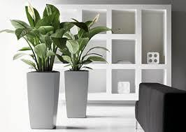 モダンプランターは和の植物にも洋の植物にも似合う万能プランター!のサムネイル画像