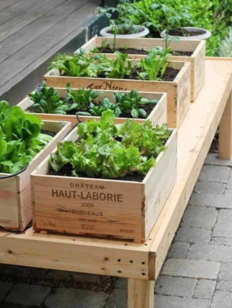 初心者は試してみよう!!簡単に始められるベランダ菜園を楽しもう!のサムネイル画像