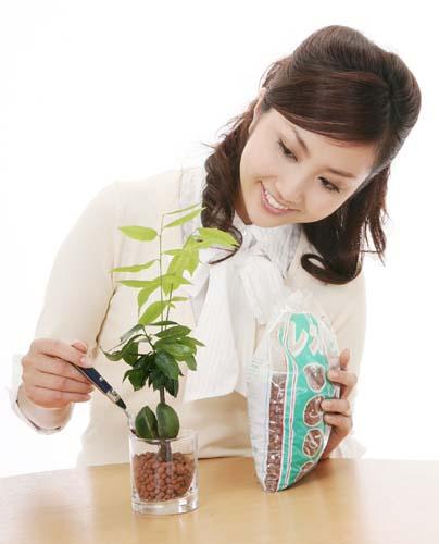 観葉植物の肥料ってどうやってやればいいの?種類は?量は?のサムネイル画像